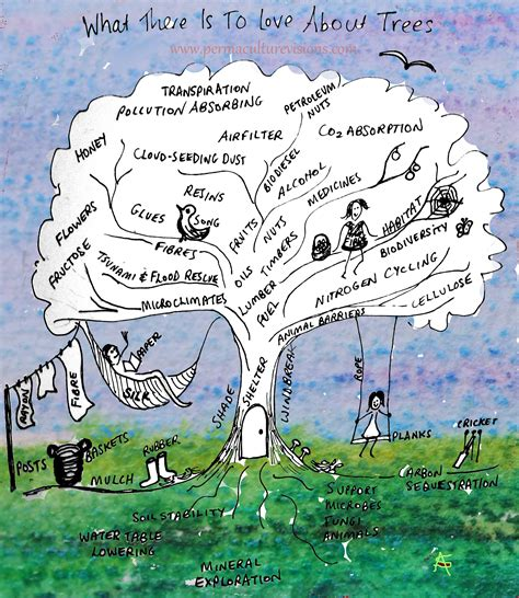 Beauty Of A Tree   Permaculture Visions Online Institute