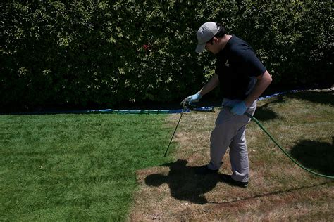 spray painting grass green california drought residents paint their lawns green