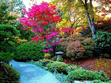 imagenes de jardines xerofilos jard 237 n japones blogdepelusita