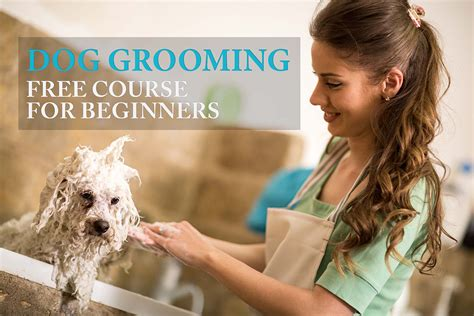 how to groom a how to groom a all in one guide for beginners couture country