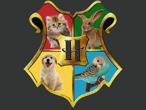 what hogwarts house what is your pet s hogwarts house playbuzz