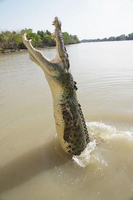 australian wildlife images   australia
