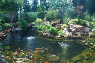 splendor koi pond koi ponds require diligence