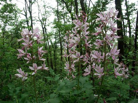 fiori bosco millefiori bosco
