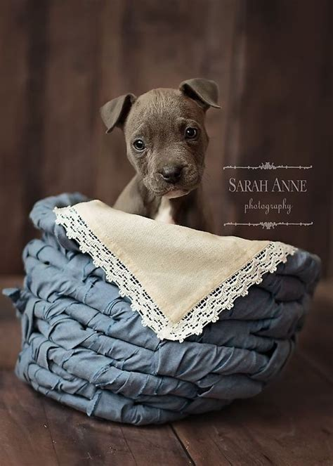 puppy cincinnati the world s catalog of ideas