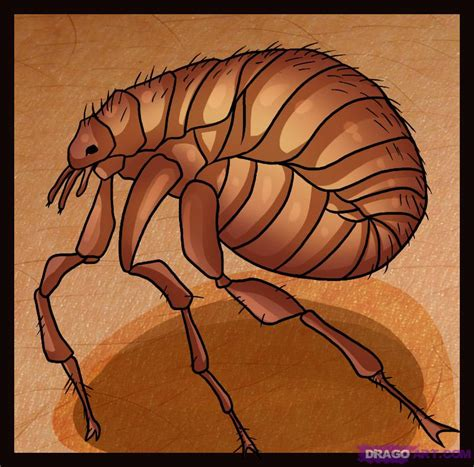 a drawing how to draw a flea step by step bugs animals free drawing tutorial added