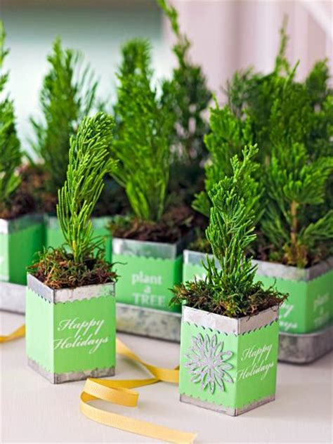 mini christmas tree live decorate with tiny trees midwest living