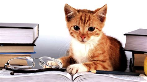 wallpaper cat book student wallpapers 183