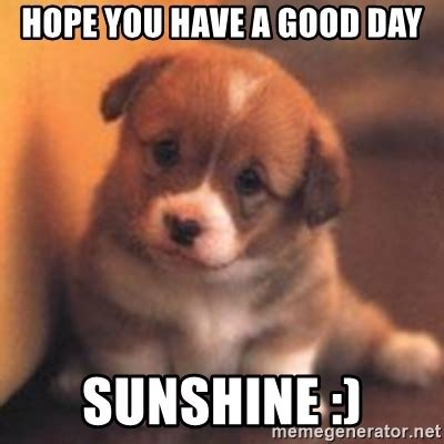 Have A Good Day Meme - hope you have a good day sunshine cute puppy meme