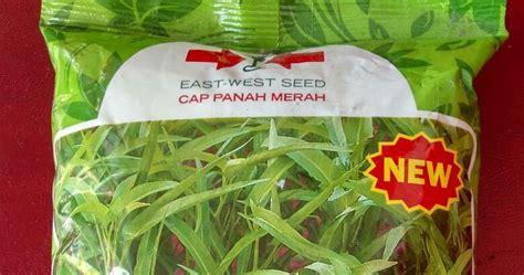 Jual Bibit Kangkung Di Malang benih unggul kangkung srimpi bibit unggul