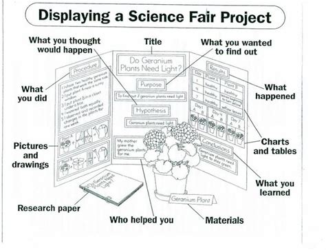 poster board layout for science fair project best 25 science fair board layout ideas on pinterest