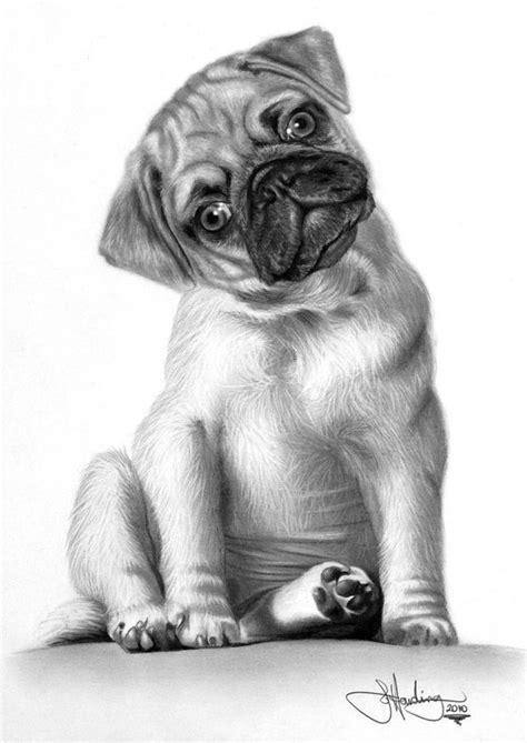 imagenes a lapiz de animales 10 lindos dibujos a lapiz de perros imagenes de perros