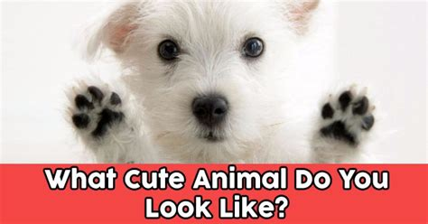 cute animal     quizdoo
