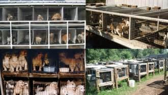 Makeshift Bed U S Needs To Abolish Inhumane Puppy Mills The Ring Of