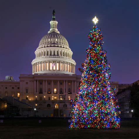 christmas trees dc in washington dc traditions and festivities