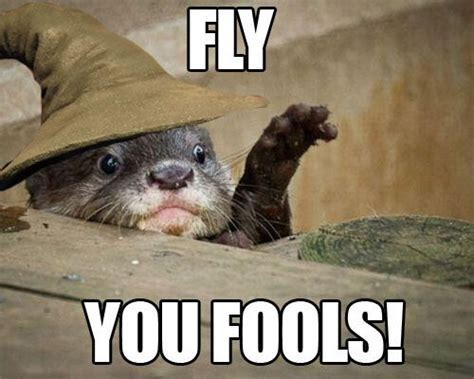 Otter Meme - fly you fools otter gandalf home pinterest smosh a