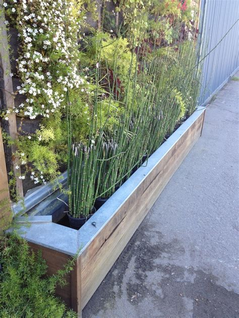 Bamboo Planter Ideas by Best 25 Bamboo Planter Ideas On Bamboo