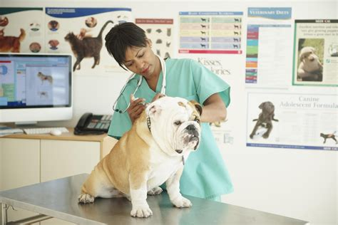 Responsibilities For A Veterinarian by Veterinarian Description Learn About Being A Vet