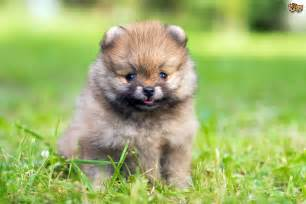 Best Small Home Dogs Top Small Breeds Best Breeds For Apartments And
