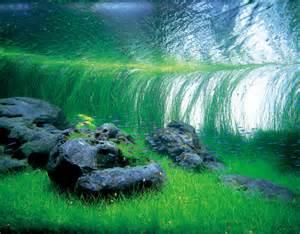 Fish Tank Aquascape Designs Nature Aquarium Photographs Amanotakashi Net