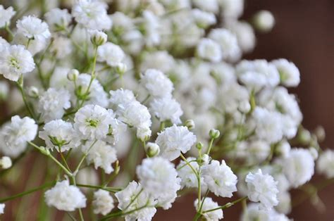 baby s breath wedding trend winter white flowers how to wire flowers video