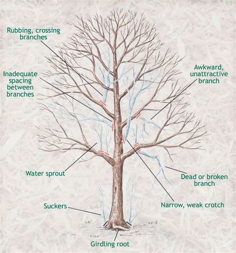 pruning fruit tree best 25 tree pruning ideas on pruning fruit