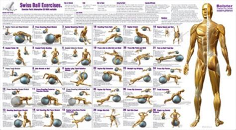 printable exercise ball workouts getting bigger arms at home back pain under left shoulder