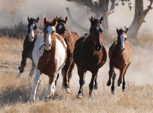 Black Mountain Oklahoma Mustangs Tenth Circuit Considers New Appeal To Block Wild Horse