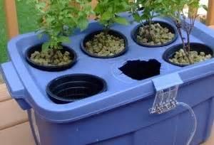 il giardino idroponico creare un giardino idroponico edilnet