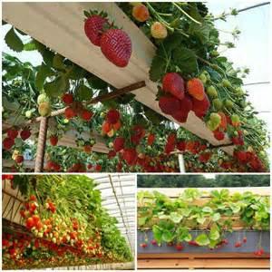 the diy vertical garden pyramid planter 237 que