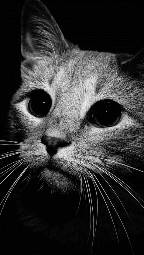 Black cat   wallpaper.sc SmartPhone