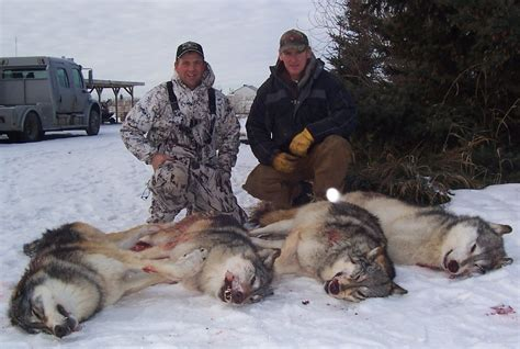 Sle Petition On Threat To Alberta Slaughters More Than 1 000 Wolves And Hundreds Of Other Animals Raincoast Conservation