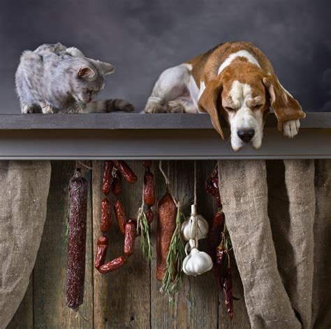 garlic and dogs can dogs eat garlic safety and toxicity of garlic carion