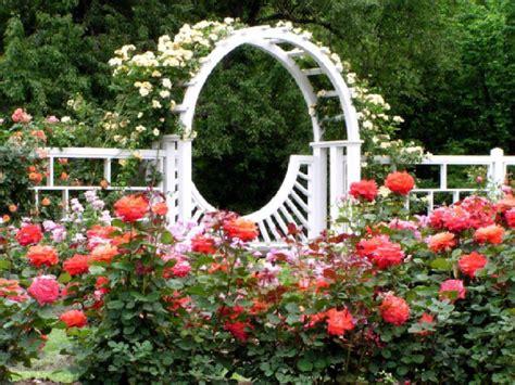background design garden rose garden wallpapers wallpaper cave