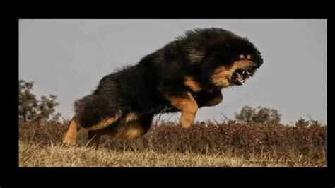 dogs are the best top 10 guard dogs in the world breeds picture