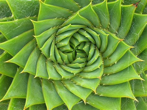 swirl pattern in nature quot just what i need quot books the patterns of life