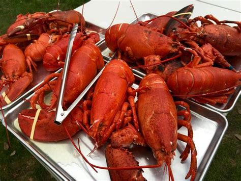 steamed lobster cooking times all in good food recipes