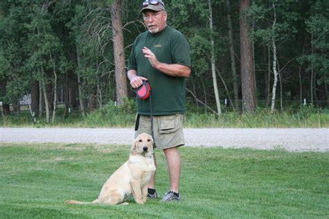 how to a to fetch birds methods labrador retriever breeders and