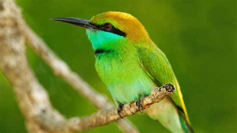 imagenes animales aves galer 237 a de im 225 genes fondos de pantalla de animales ex 243 ticos