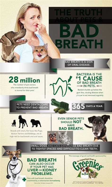 my yorkie has bad breath february is national pet dental health month bad breath in pets is nothing to smile