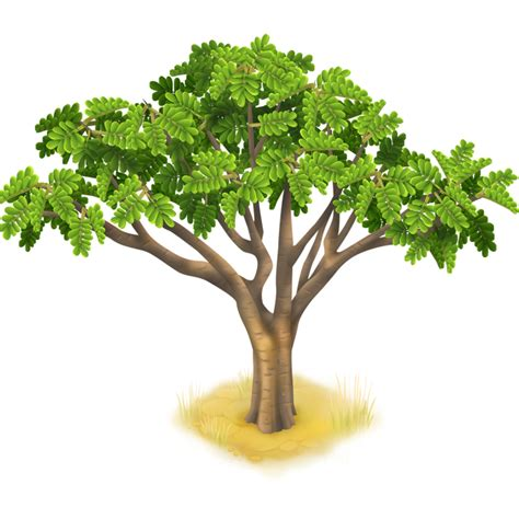 image acacia tree png hay day wiki fandom powered by