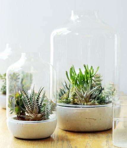 kakteen im schlafzimmer sukkulente pflanzen unter der glashaube bild 6 living