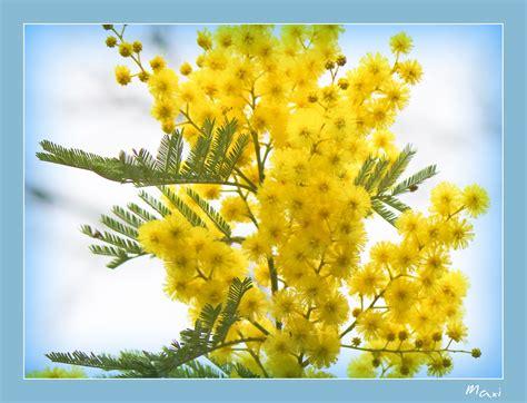 imagenes de flores amarillas flores amarillas auto design tech
