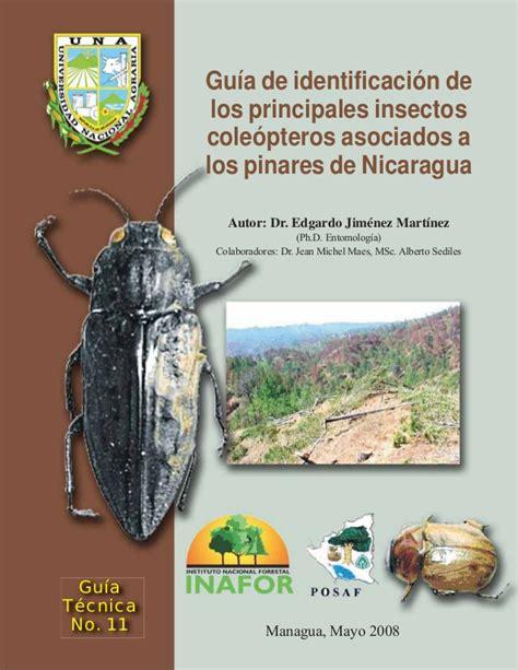 gua de insectos de gu 237 a de identificaci 243 n de los principales insectos coleopteros