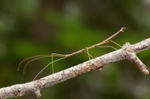 walking stick wypr