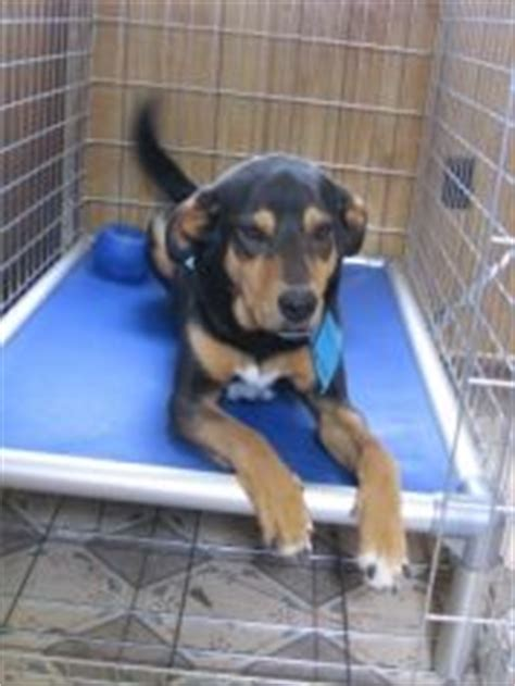 rottweiler crate rottweiler on rottweilers beds and breeds