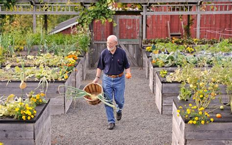 unique diy raised garden bed ideas gardening viral