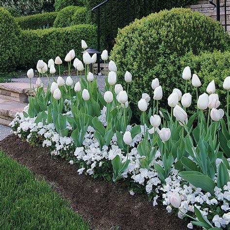 white flowers garden 341 best beautiful white gardens images on