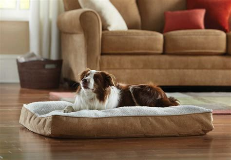 animal planet dog bed about merchsource