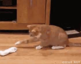 sock cat gif sock gif find on giphy